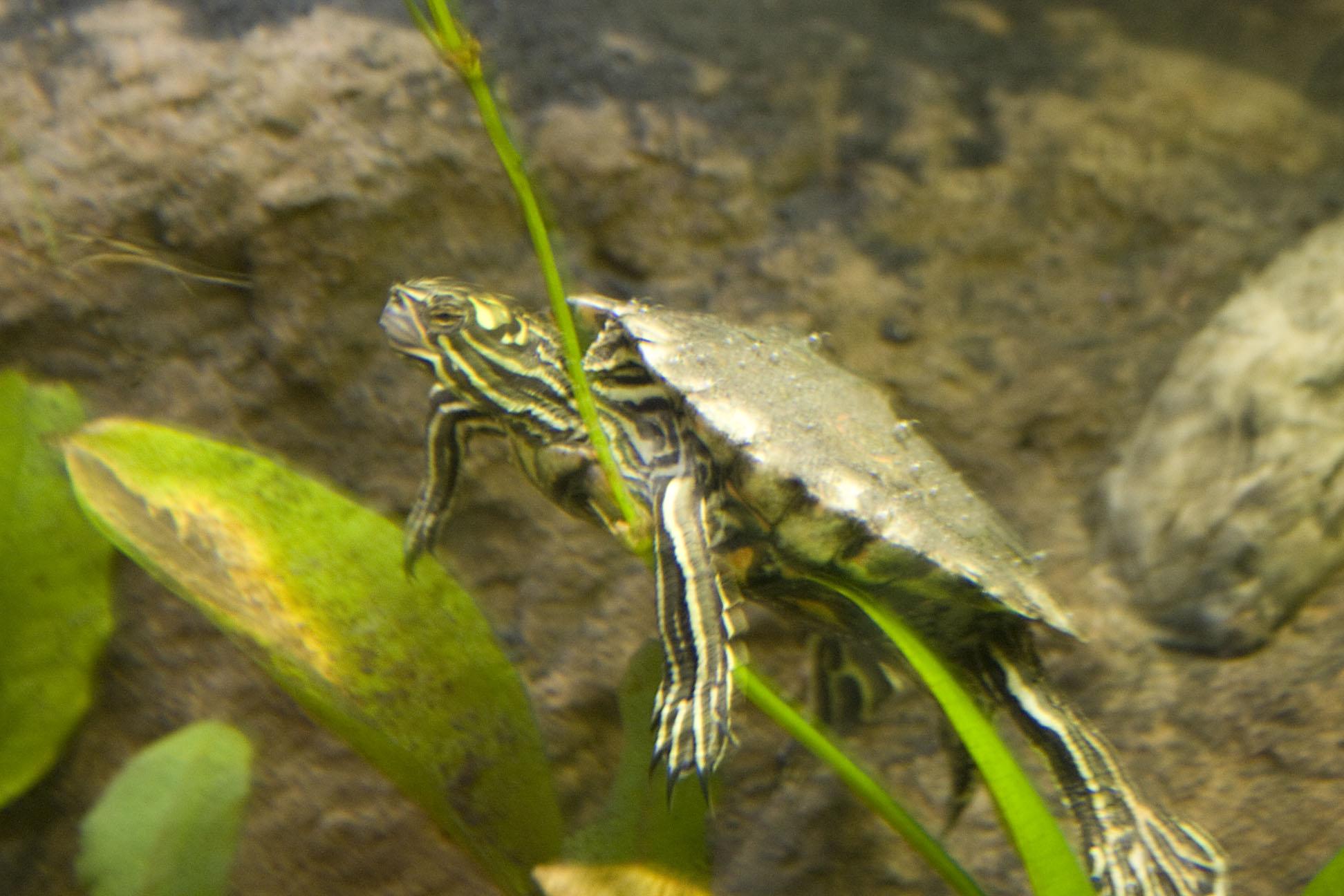 090326-shedd-aquarium-turtle-1 Vikki Baptistes Home-Based Business